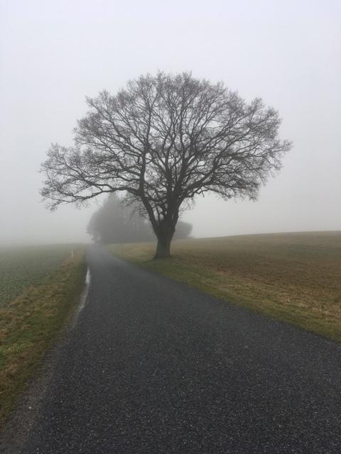 Meditativ vandring på landevej, trivsel og velvære på en solskinsrig dag